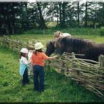 ribe-cibo-ai-cavalli