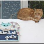 gatto (1)