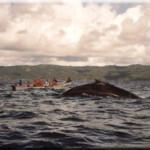 avvistamento-balene
