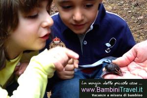 Bambini Travel