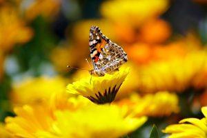 valle-farfalle-rodi